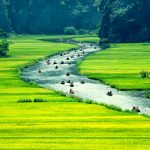 best things to do in Ninh Binh - Hanoi to Ninh Binh